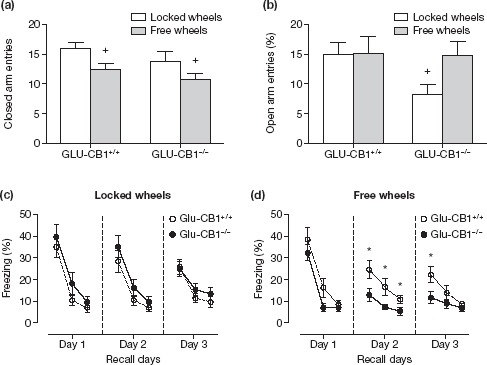 CB1 receptors and behavioral consequences of wheel running. (a) Activity and (b) anxiety-related behavior in the elevated plus-maze of Glu-CB1
