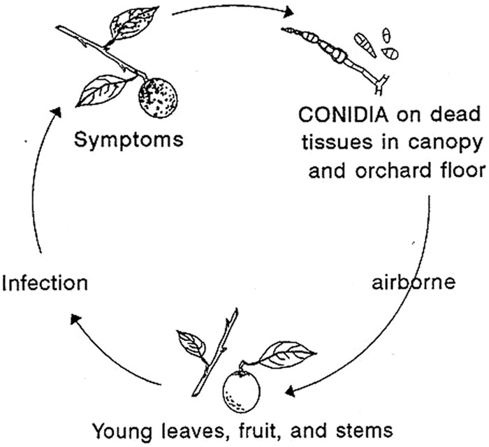 Disease cycle of