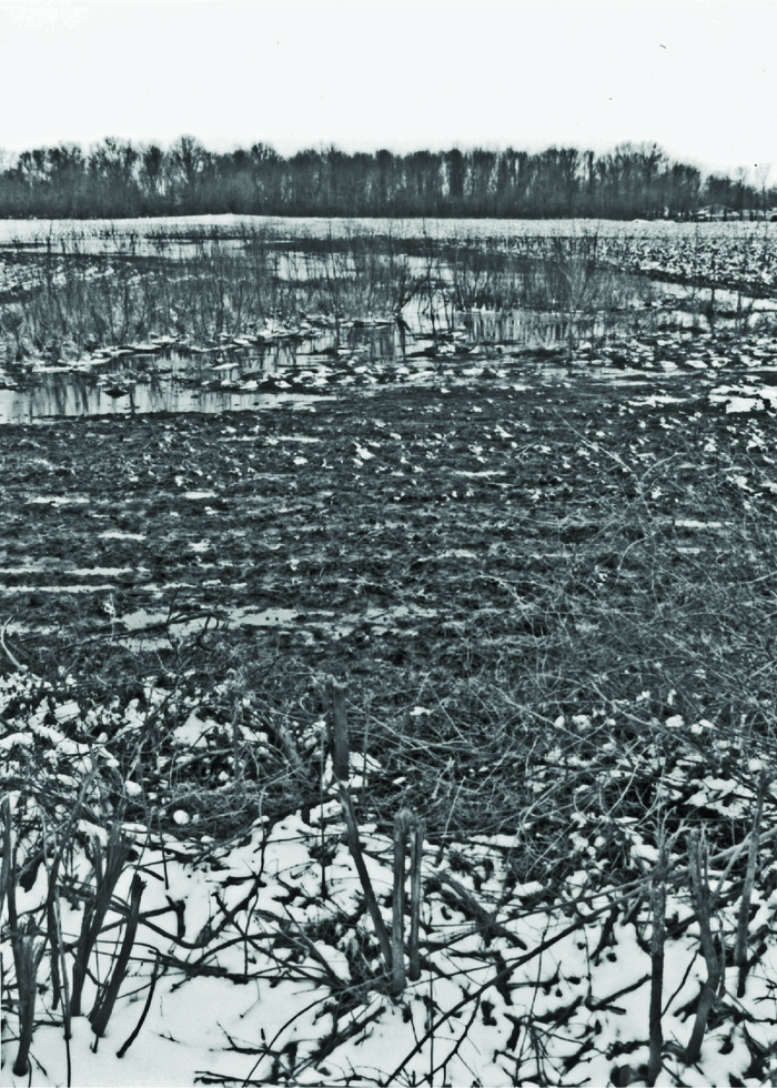 In this farm field in the glaciated part of southeastern Ohio, frozen water and snow cover much of the land in early spring. Vegetation is crop residue. Delineations under these conditions require careful and thorough efforts.