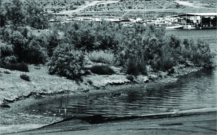 Wetland plants can develop wherever water appears. Impoundments, like this one behind Boulder Dam in Arizona, often drown other riverine system features, but new wetlands can quickly develop.